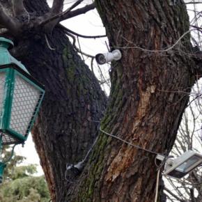 """Esteban Paños: """"Los cables y focos siguen en los árboles de la Vega a pesar de que el gobierno local se comprometió en julio a retirarlos"""""""