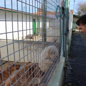 Ciudadanos apela a la responsabilidad de los albaceteños para combatir el abandono de animales